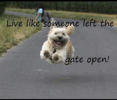 live like someoneleft the gate open dog joke