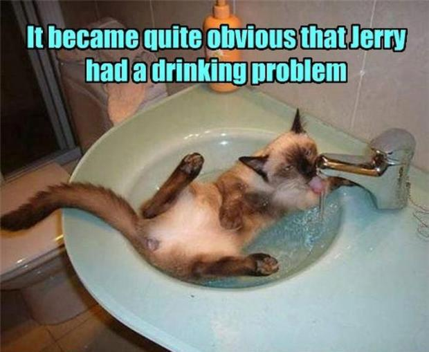 best hilarious lolcat joke