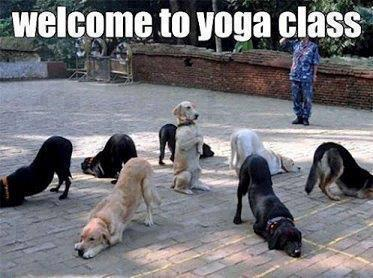 dog yoga joke
