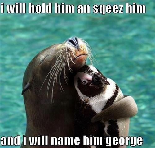 Funny animals pics jokes funny pic of the day