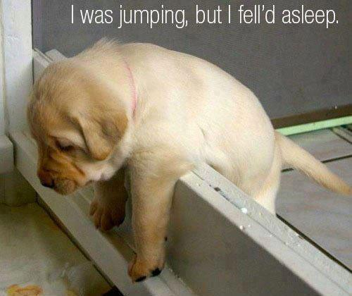 funny dogs pics 3