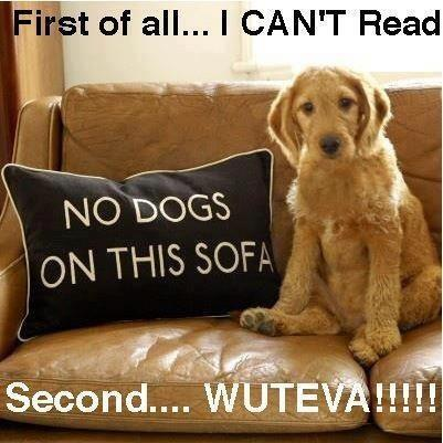 Funny dog pic of the day best funny jokes and hilarious for Funny sofa pictures