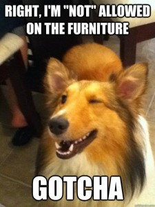 funny funny dogs