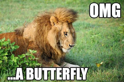 Funny animal jokes - photo#19