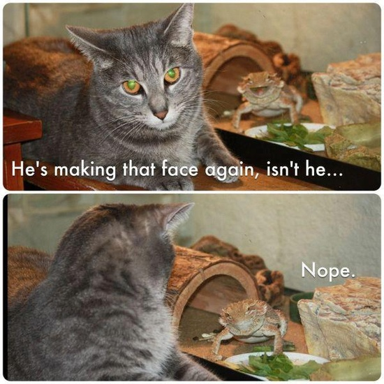 best really funny cat pic