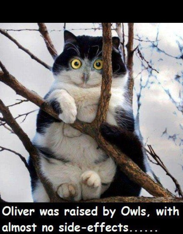 lol funny cat pic best funny jokes and hilarious pics 4u