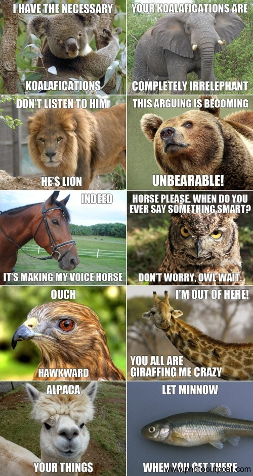 LOL – Funny Animals Joke Pic!