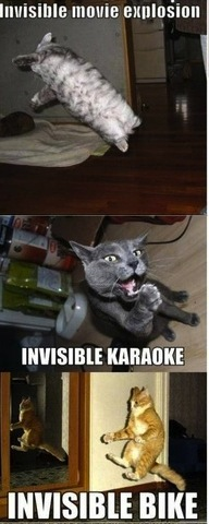invisible cats 2