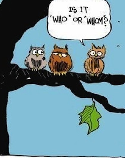 funny cartoon owls - photo #1